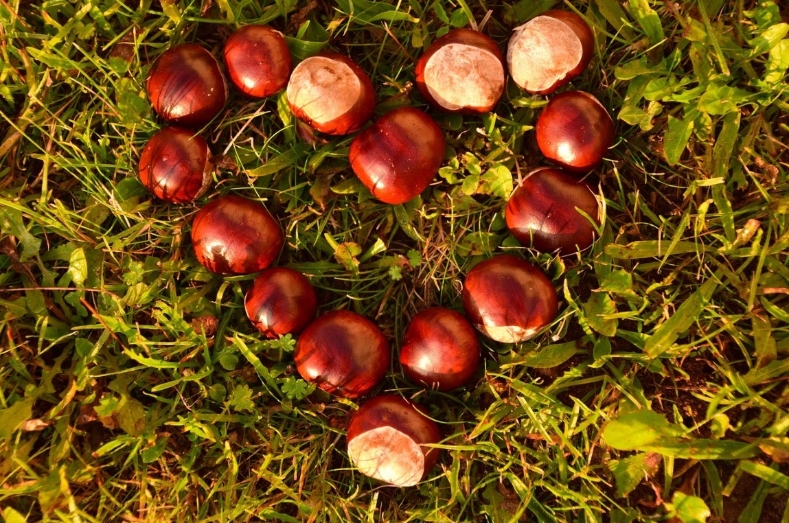 castagne1-eventiintoscana-it