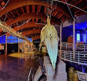 18418__museo+di+storia+naturale