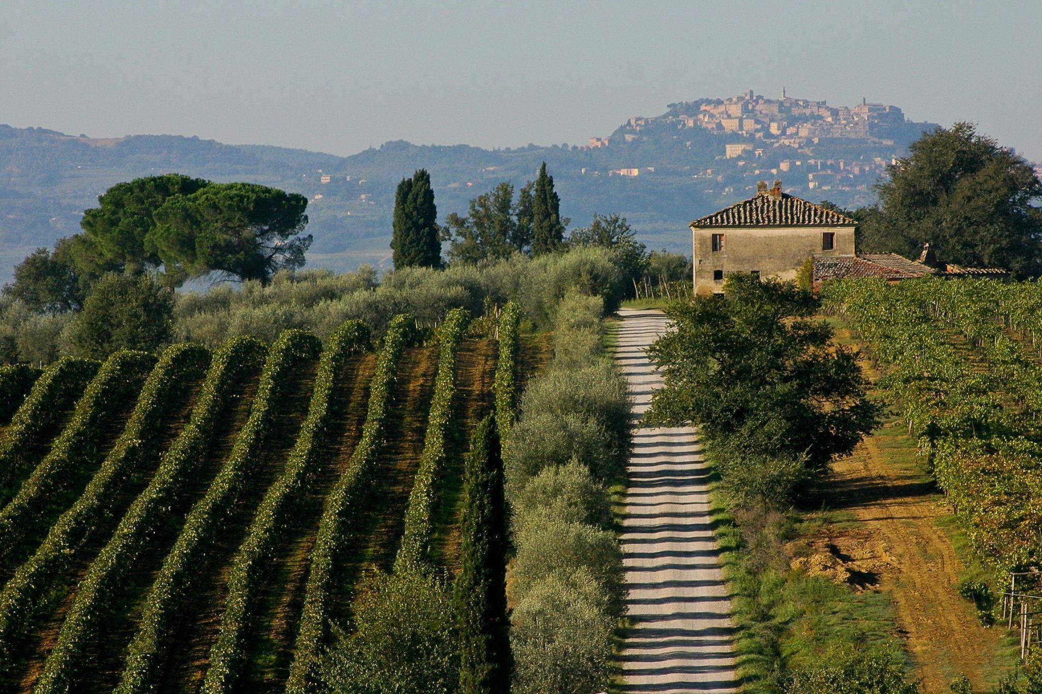 vigneto-e-paesaggio-anteprima vino nobile 2017