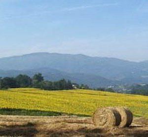 20704__mugello.paesaggio