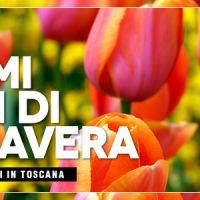 Speciale fiori aprile 2017