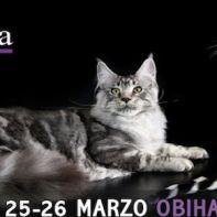 expo-felina