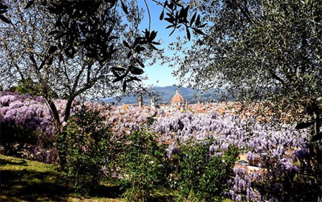 Apertura giardino dell 39 iris piazzale michelangiolo - Giardino dell iris firenze ...