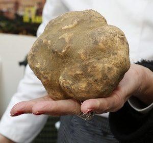 mostra mercato tartufo bianco san miniato pisa