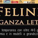 25855__felinimail