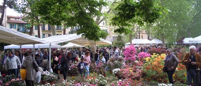 Fiera promozionale di piante e fiori – piazza dei Ciompi, Firenze
