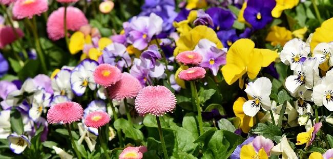 pienza e i fiori