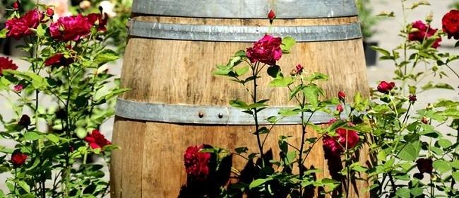 30382__festa+della+rosa+roccalbegna