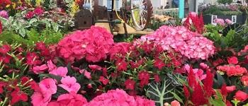 festa dei fiori greve in chianti