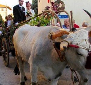33486__mostra+carro+agricolo+fratticciola