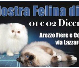 esposizione internazionale felina arezzo