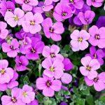 fiori_fiore_pixabay