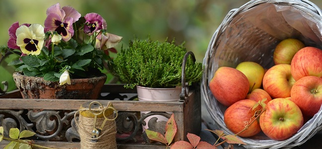 fiori autunno_pixabay