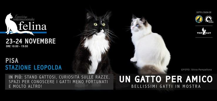 Un gatto per amico. Esposizione Internazionale Felina – Stazione Leopolda, Pisa