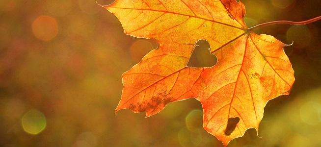 autunno_pixabay