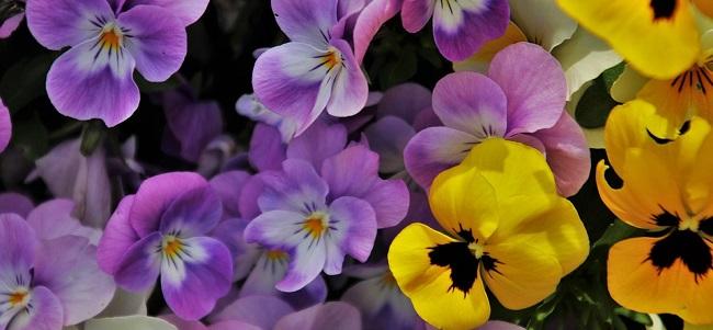fiori_fiore_autunn_pixabay