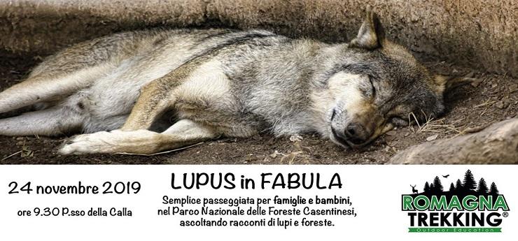 Lupus in fabula: passeggiata per famiglie sulle tracce del Lupo – Parco Nazionale delle Foreste Casentinesi, Arezzo