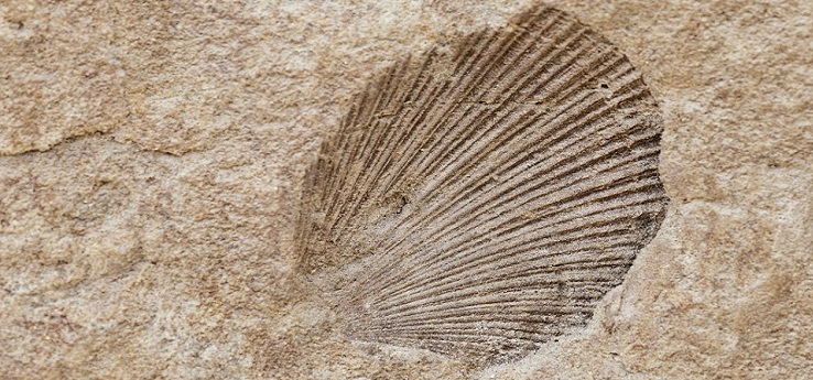 Rassegna di fossili 'Il mare a Montepulciano' – Montepulciano (Siena)