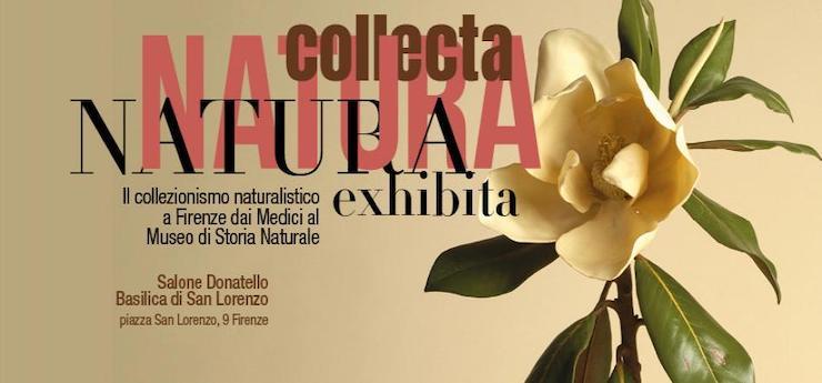 Natura collecta Natura exibita – Basilica di San Lorenzo, Firenze