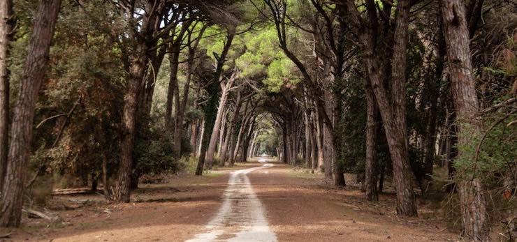 Azimut Treks: le escursioni di novembre – Luoghi vari in Toscana