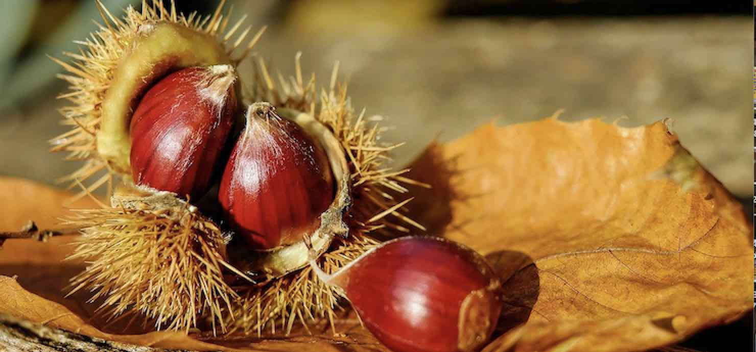 —annullata ultima data— Mostra mercato del marron buono di Marradi – Marradi (Firenze)