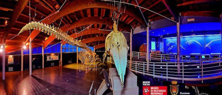 Museo di Storia naturale del Mediterraneo – Villa Henderson, Livorno (Livorno)