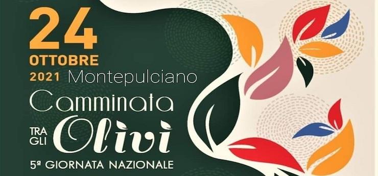 Camminata tra gli olivi – Montepulciano (Siena)